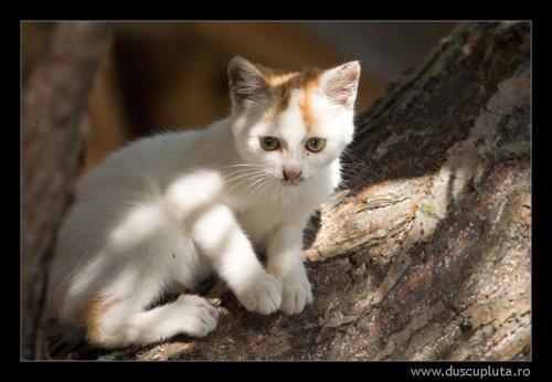 pisica din Portita