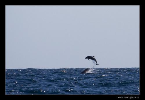 delfini in libertate
