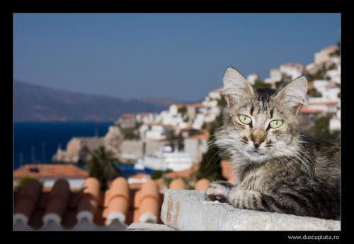 pisici pe acoperis
