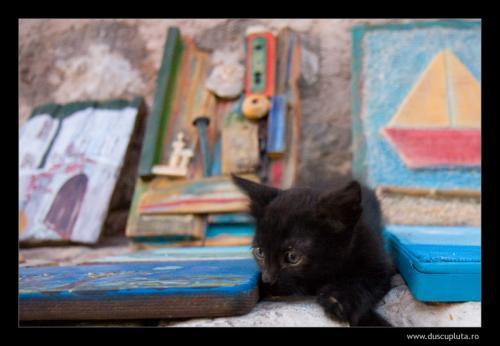 pisici ganditoare