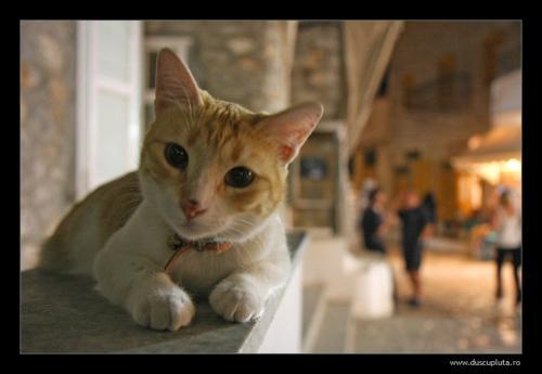 pisici cu priviri de caine