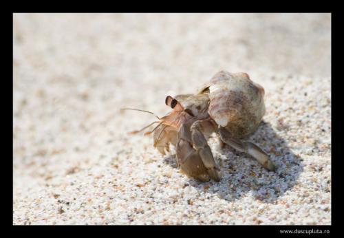 crab sand 3
