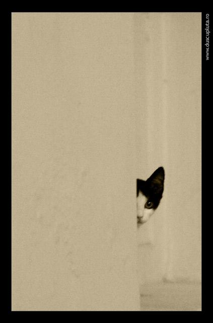 pisici speriate