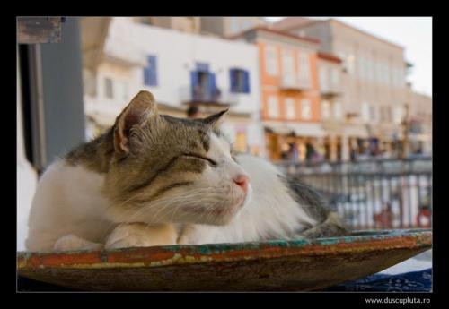 pisici expresive