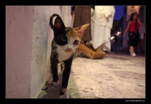 pisici de colt