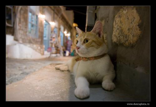 pisici care te ignora